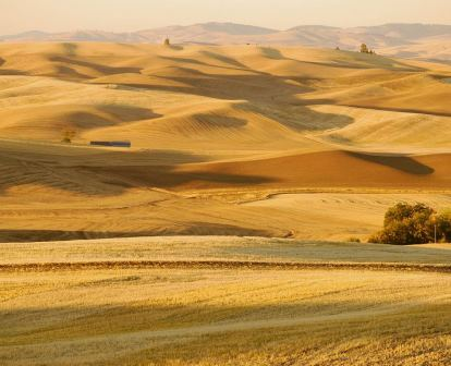 Palouse stubble fields  - Foto © Kamiak Butte, Cheryl Dudley, Flickr, lizenziert unter CC BY 2.0 über Wikimedia Commons
