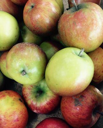 Äpfel - Foto © Veronika Neukum, Agentur Zukunft